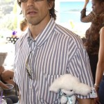 kiedis-toy-poodle