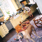 Photo taken by Blackie Dammett of Anthony Kiedis kitchen and dog