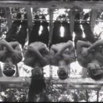 RHCP-upside-down